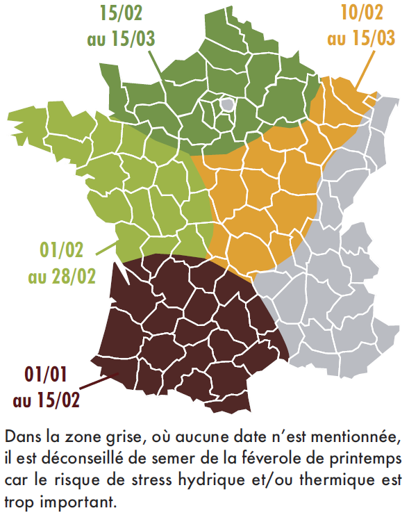 date de semis optimale de la févrole de printemps