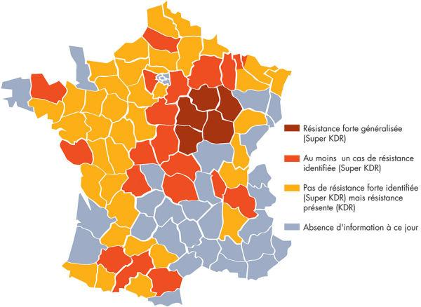 carte altises