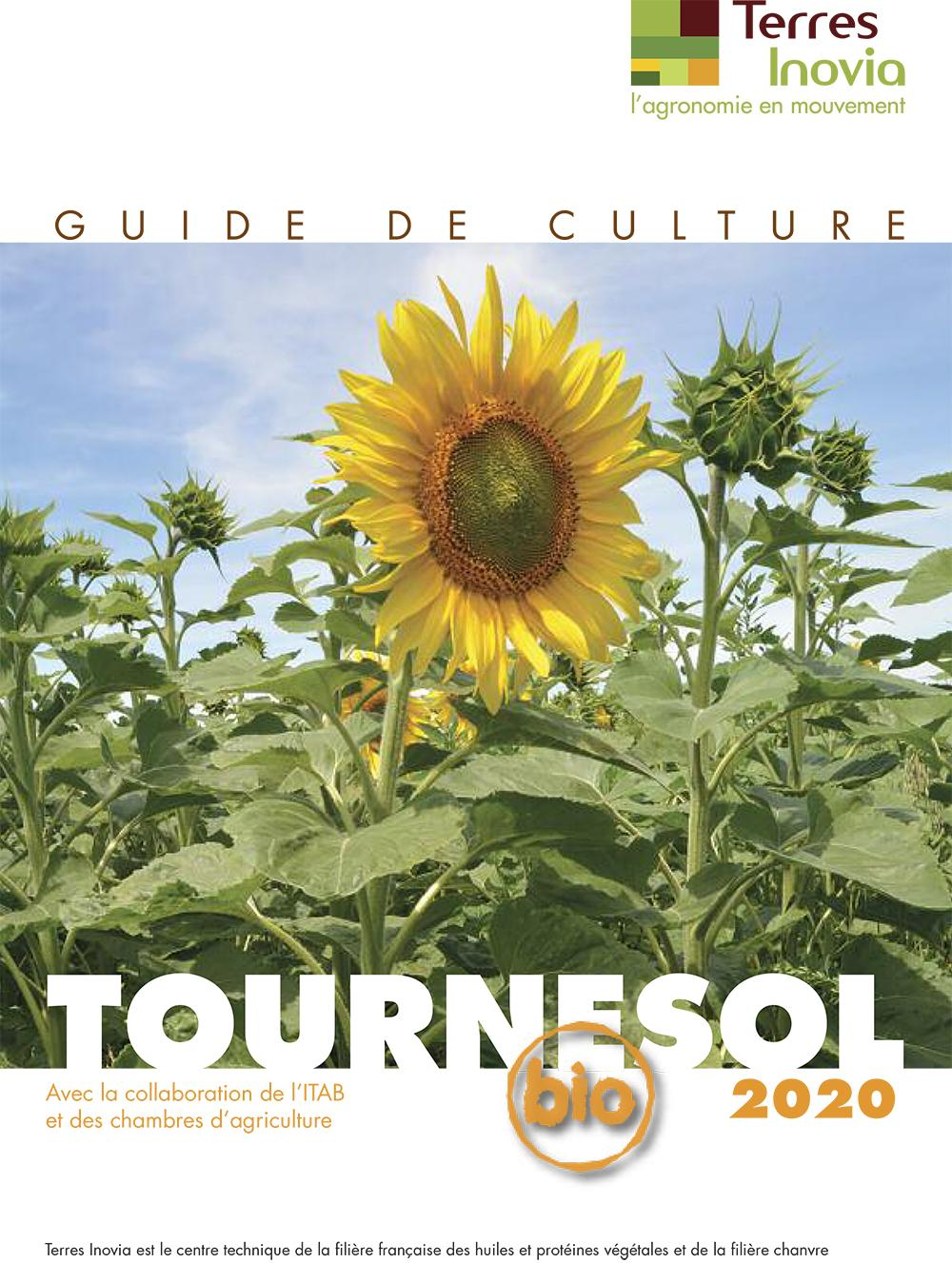 Guide de culture tournesol bio