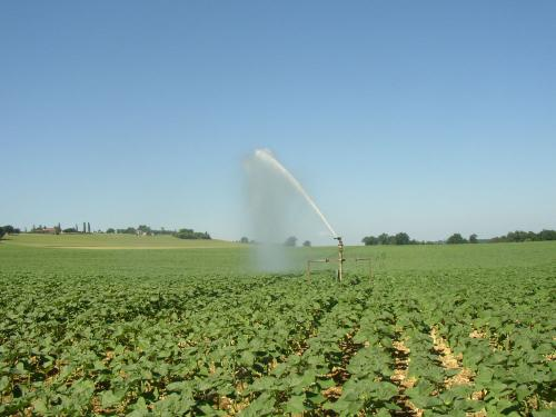 irrigation tournesol